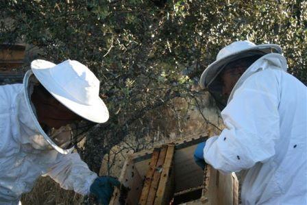 productores de miel y polen eco trabajando en el colmenar.