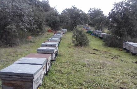 Productores de miel y polen eco, panal de miel eco de de una de las colmenas de La Barrosilla.